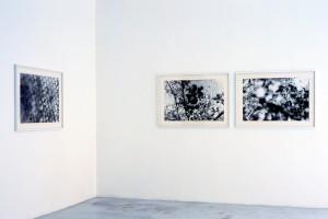 Pierre SAVATIER : « Pommes et fleurs #5 », 1993, photogramme sur photographie noir et blanc argentique, 60 x 91 cm ; « Pommes et fleurs #3 », 1993, photogramme sur photographie noir et blanc argentique, 60 x 91 cm ; « Pommes et fleurs #1 », 1993, photogramme sur photographie noir et blanc argentique, 60 x 91 cm