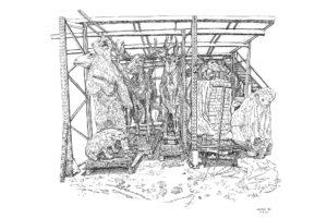 Ours, ourson, dromadaire, etc., Hangar Taxidermie, réserve du Muséum national d'histoire naturelle, 9.1.219, encre de Chine sur papier, 50 x 65 cm